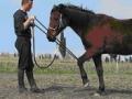 2009 - Natural Horsemanship tečaj